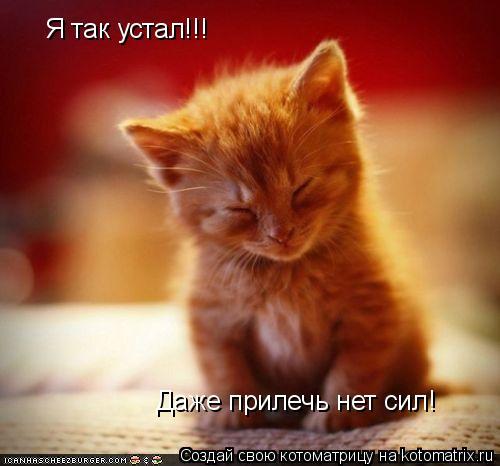 Котоматрица: Я так устал!!! Даже прилечь нет сил!