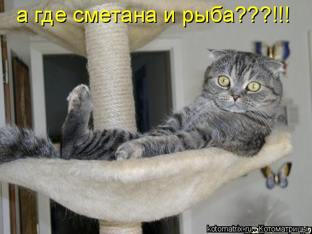 Котоматрица: а где сметана и рыба???!!!