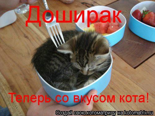 Котоматрица: Доширак  Теперь со вкусом кота!
