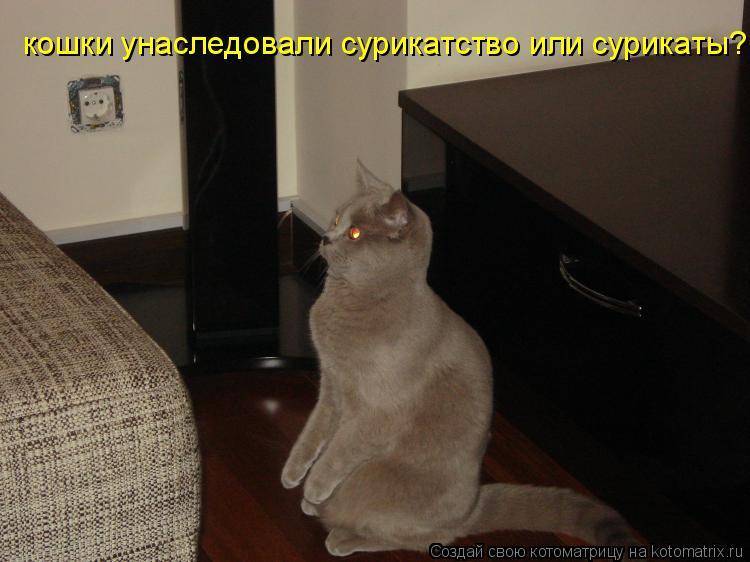 Котоматрица: кошки унаследовали сурикатство или сурикаты?