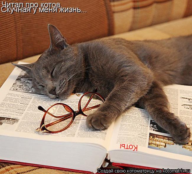Котоматрица: Читал про котов. Скучная у меня жизнь... Коты