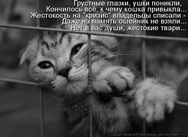 """Котоматрица: Грустные глазки, ушки поникли, Кончилось всё, к чему кошка привыкла... Жестокость на """"кризис"""" владельцы списали -  Даже на память ошейник не вз"""