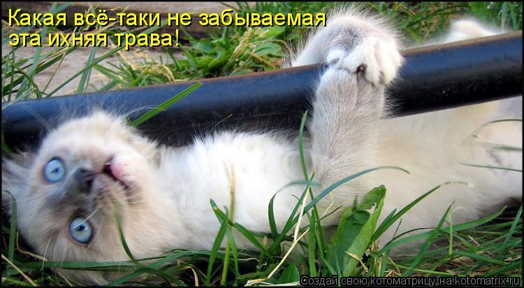 Котоматрица: Какая всё-таки не забываемая эта ихняя трава!