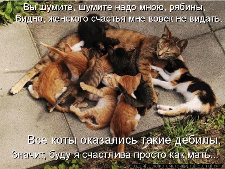 Котоматрица: Вы шумите, шумите надо мною, рябины,  Все коты оказались такие дебилы,  Видно, женского счастья мне вовек не видать. Значит, буду я счастлива п