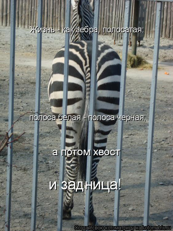 Котоматрица: Жизнь - как зебра, полосатая:  полоса белая - полоса черная, а потом хвост и задница!