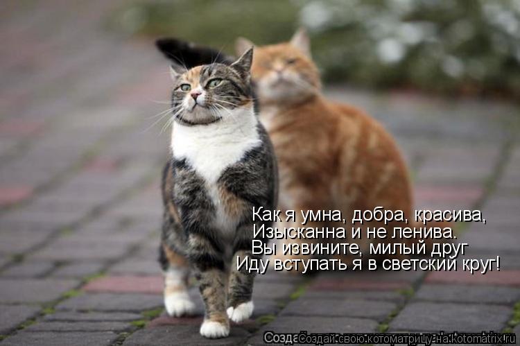 Котоматрица: Как я умна, добра, красива, Изысканна и не ленива. Вы извините, милый друг Иду вступать я в светский круг!
