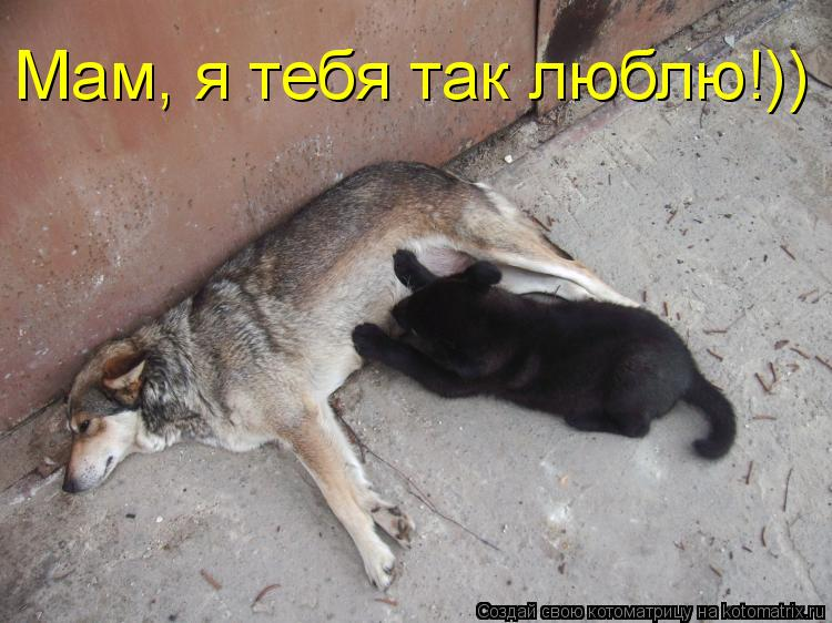 Котоматрица: Мам, я тебя так люблю!))