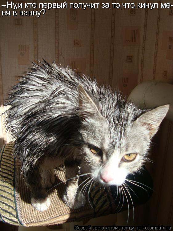 Котоматрица: --Ну,и кто первый получит за то,что кинул ме- ня в ванну?