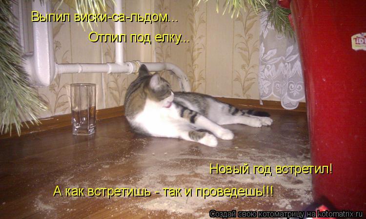 Котоматрица: Выпил виски-са-льдом...  Отлил под елку...  Новый год встретил!  А как встретишь - так и проведешь!!!