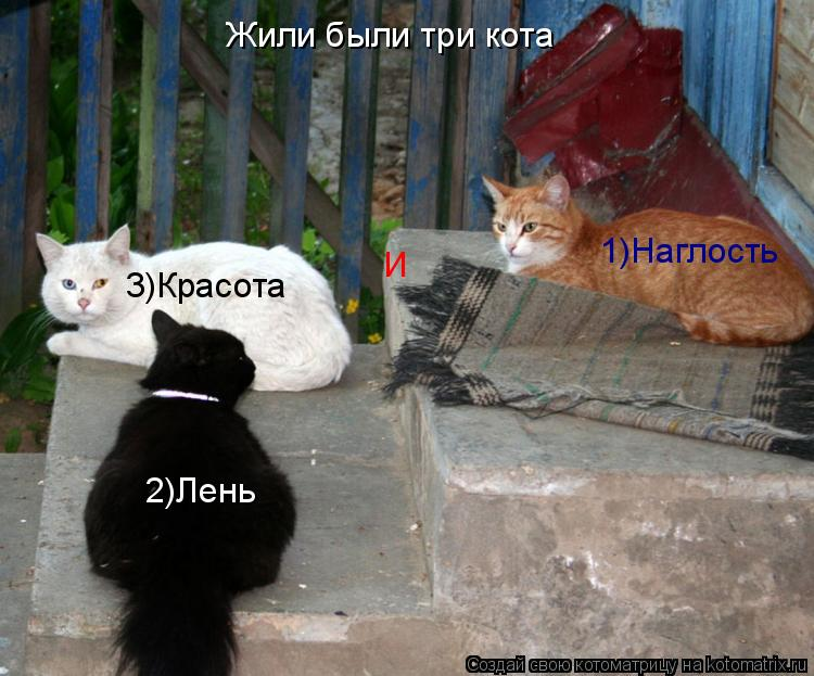 Котоматрица: Жили были три кота 1)Наглость 2)Лень 3)Красота И