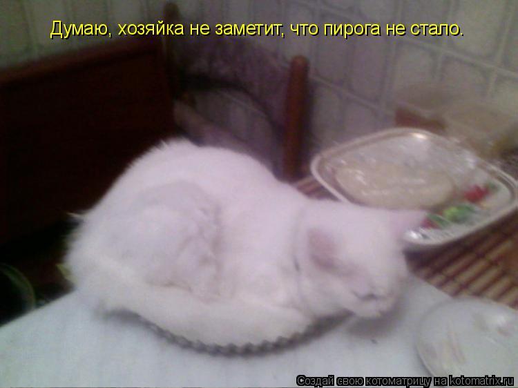 Котоматрица: Думаю, хозяйка не заметит, что пирога не стало.
