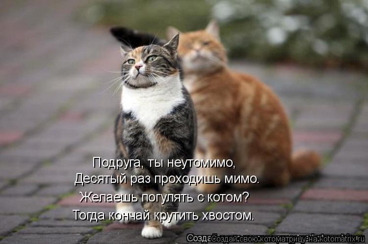 Котоматрица: Подруга, ты неутомимо, Десятый раз проходишь мимо. Желаешь погулять с котом? Тогда кончай крутить хвостом.
