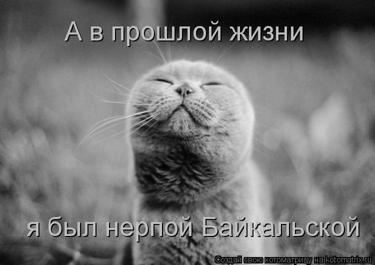 Котоматрица: А в прошлой жизни я был нерпой Байкальской