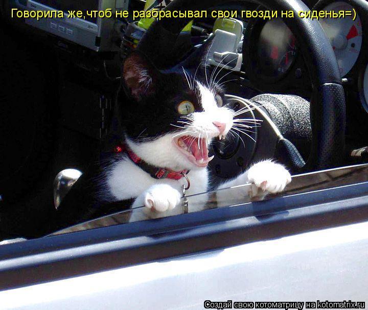 Котоматрица: Говорила же,чтоб не разбрасывал свои гвозди на сиденья=)