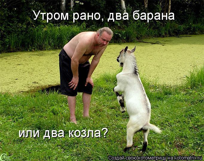 Котоматрица: Утром рано, два барана или два козла?