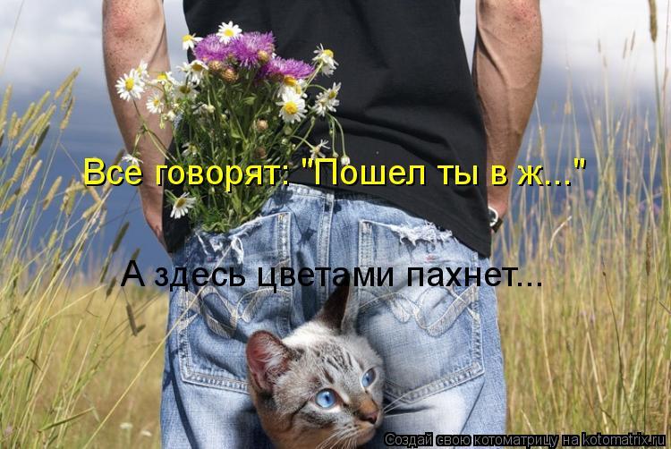 """Котоматрица: Все говорят: """"Пошел ты в ж..."""" А здесь цветами пахнет..."""