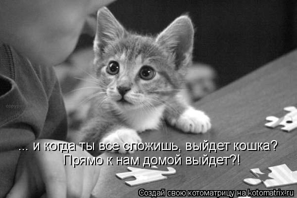 Котоматрица: ... и когда ты все сложишь, выйдет кошка? Прямо к нам домой выйдет?!