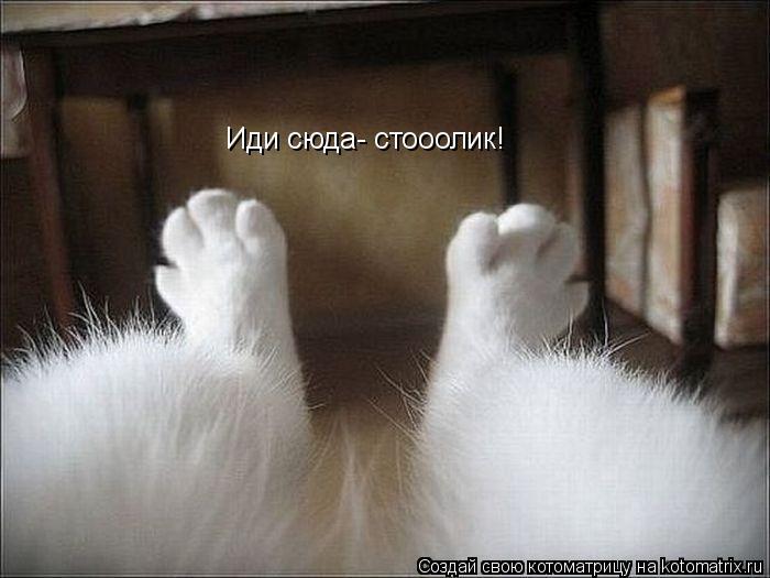 Котоматрица: Иди сюда- стооолик!