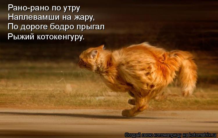 Котоматрица: Рано-рано по утру Наплевамши на жару, По дороге бодро прыгал Рыжий котокенгуру.