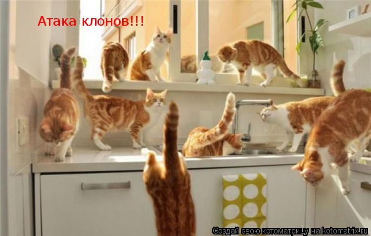 Котоматрица: Атака клонов!!!