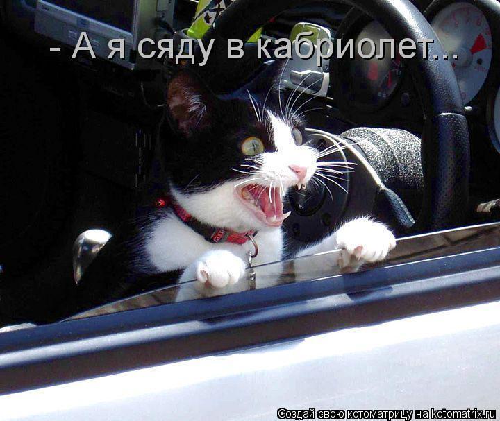 Котоматрица: - А я сяду в кабриолет...