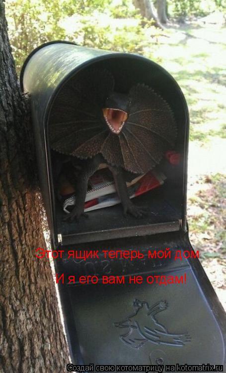 Котоматрица: Этот ящик теперь мой дом  И я его вам не отдам!