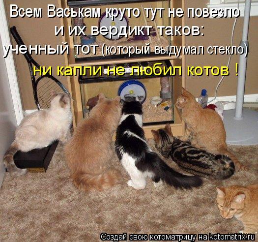 Котоматрица: Всем Васькам круто тут не повезло и их вердикт таков: ученный тот  (который выдумал стекло) ни капли не любил котов !