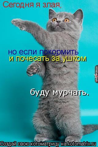 Котоматрица: Сегодня я злая, но если покормить  и почесать за ушком буду мурчать.
