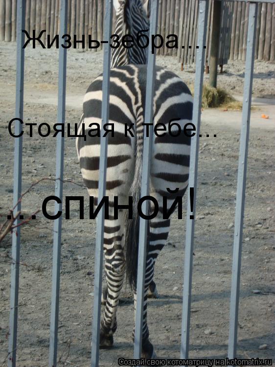 Котоматрица: Жизнь-зебра.... Стоящая к тебе... ...спиной!