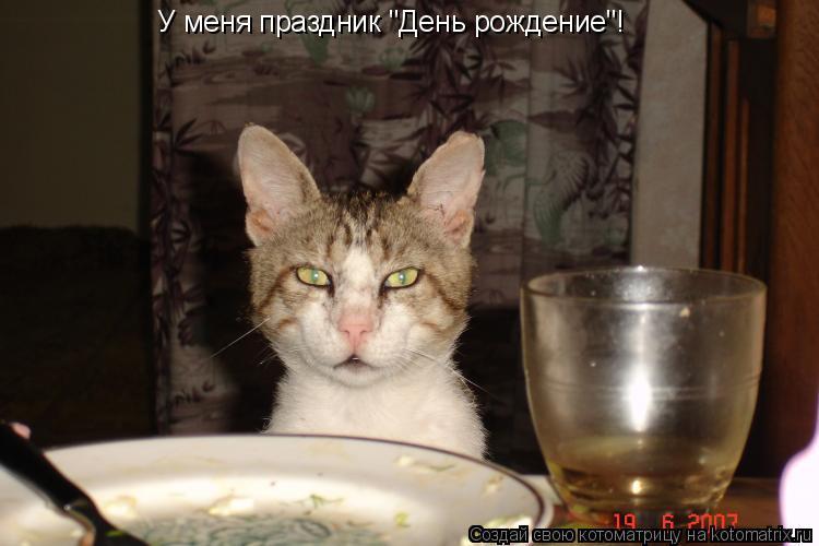 """Котоматрица: У меня праздник """"День рождение""""!"""