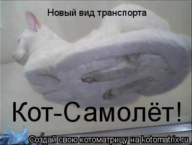Котоматрица: Новый вид транспорта Кот-Самолёт!