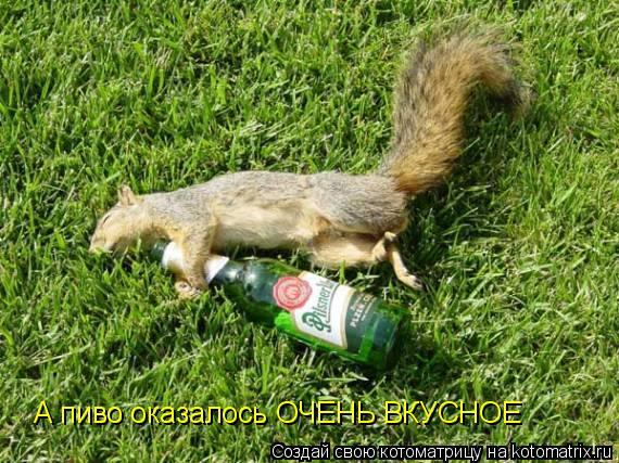 Котоматрица: А пиво оказалось ОЧЕНЬ ВКУСНОЕ