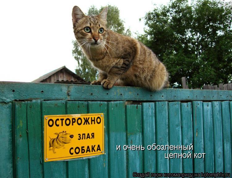 Котоматрица: и очень обозленный  цепной кот