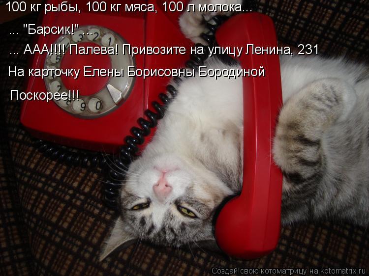 """Котоматрица: 100 кг рыбы, 100 кг мяса, 100 л молока... ... """"Барсик!"""" ... ... ААА!!!! Палева! Привозите на улицу Ленина, 231 На карточку Елены Борисовны Бородиной П"""