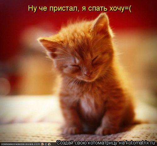 Котоматрица: Ну че пристал, я спать хочу=(