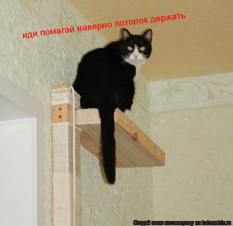 Котоматрица: иди помагай наверно потолок держать