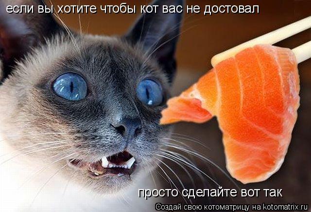 Котоматрица: если вы хотите чтобы кот вас не достовал просто сделайте вот так