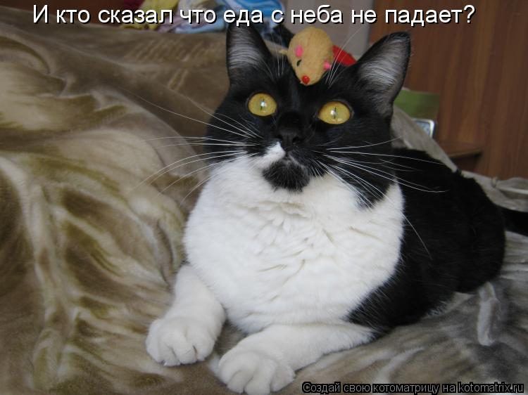 Котоматрица: И кто сказал что еда с неба не падает?