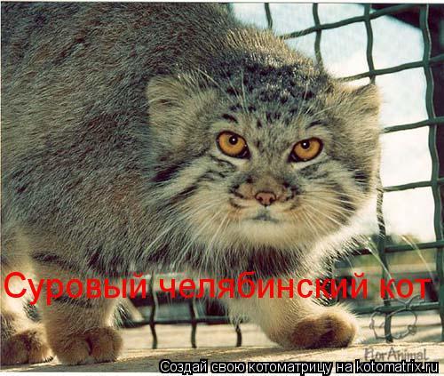 Котоматрица: Суровый челябинский кот