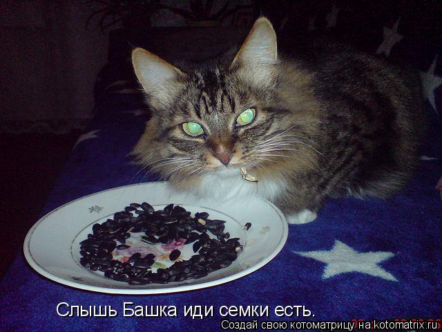 Котоматрица: Слышь Башка иди семки есть.