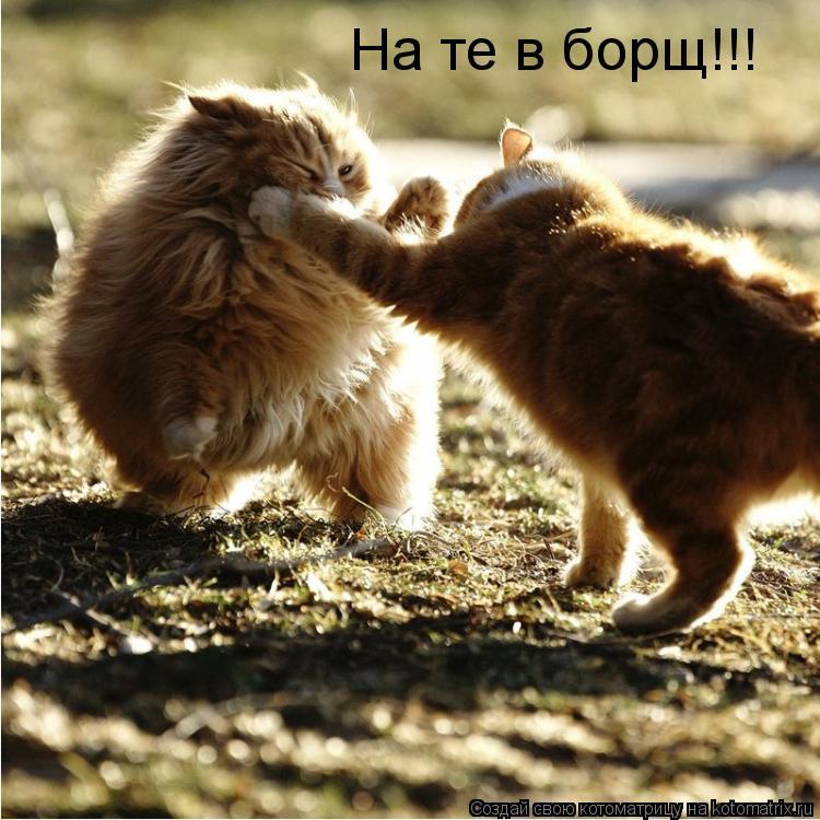Котоматрица: На те в борщ!!!