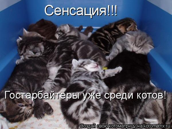 Котоматрица: Сенсация!!! Гостарбайтеры уже среди котов!