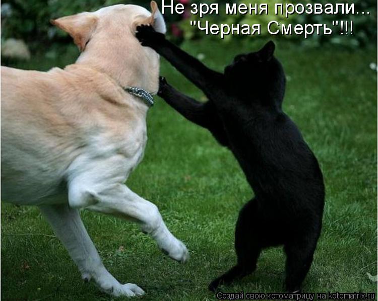 """Котоматрица: Не зря меня прозвали... """"Черная Смерть""""!!!"""