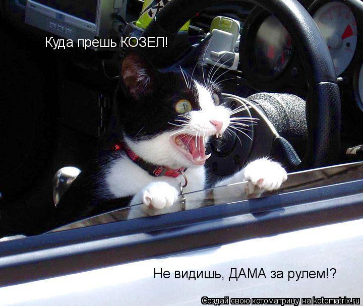 Котоматрица: Куда прешь КОЗЕЛ! Не видишь, ДАМА за рулем!?