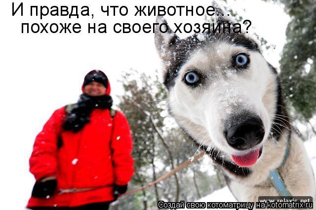 Котоматрица: И правда, что животное... похоже на своего хозяина?