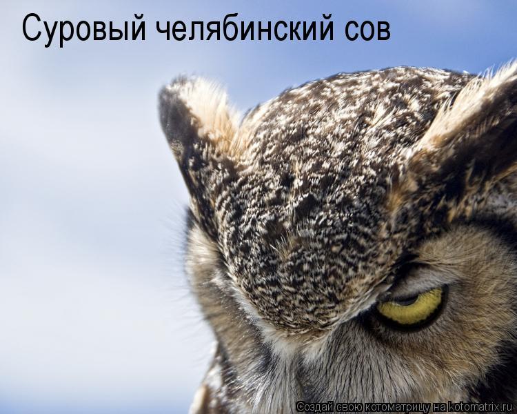 Котоматрица: Суровый челябинский сов