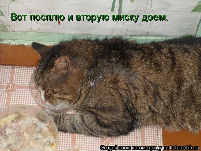 Котоматрица: Вот посплю и вторую миску доем.