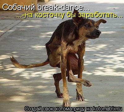 Котоматрица: Собачий break-dance... ...-на косточку бы заработать...