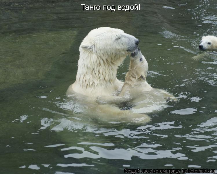 Котоматрица: Танго под водой!
