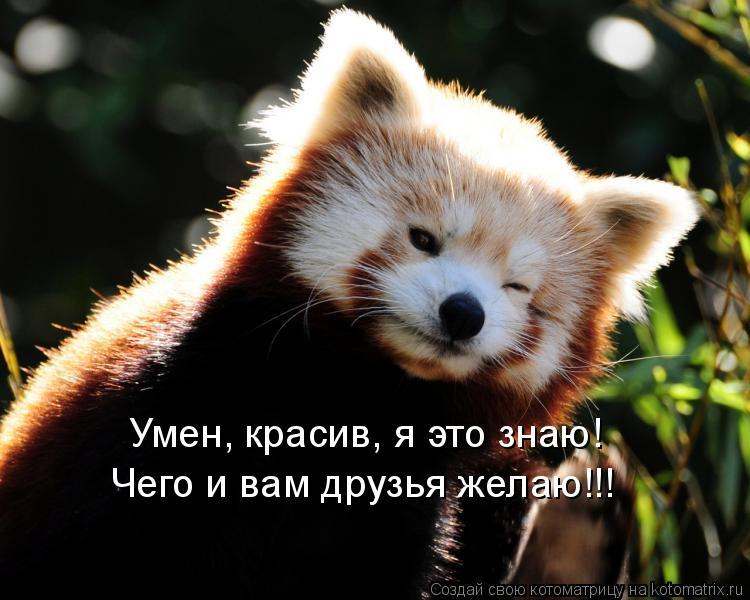 Котоматрица: Умен, красив, я это знаю! Чего и вам друзья желаю!!!